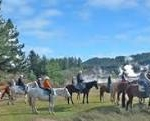 Horse riding Taupo